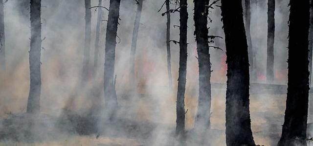 Solastalgie: Schmerz über den Verlust der Umwelt