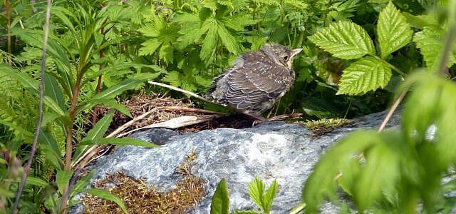 Babyvogel gefunden
