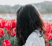 tulpen holland zaun instagram tourismus