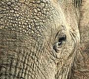 wilhüter tötet 5000 elefanten