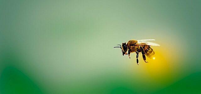 10 Pflanzen, die Bienen nichts nützen