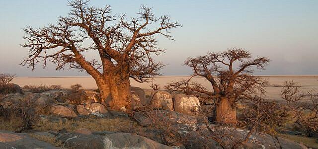 Baobab-Produkte