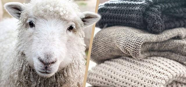 Nachhaltige-Wolle