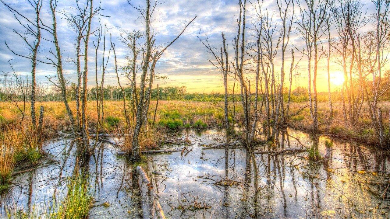 Sumpf: So wichtig sind die Feuchtgebiete für die Natur