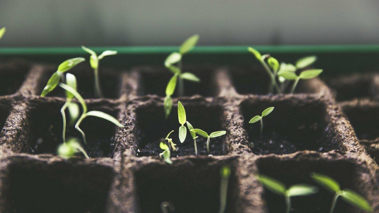 Square Foot Gardening Gärtnern mit kleinen Quadraten – auch am ...