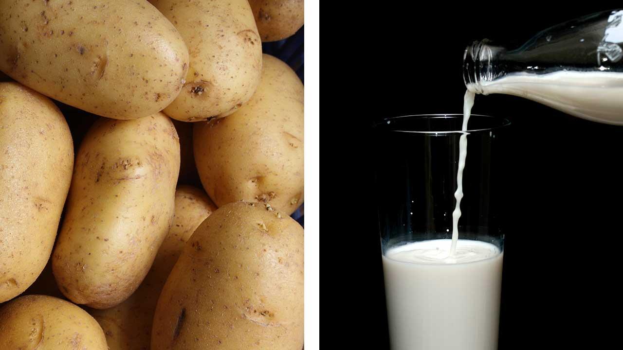 Milch-aus-Kartoffeln-Innovation-aus-Schweden