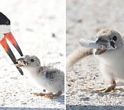 vogel füttert zigarettenstummel
