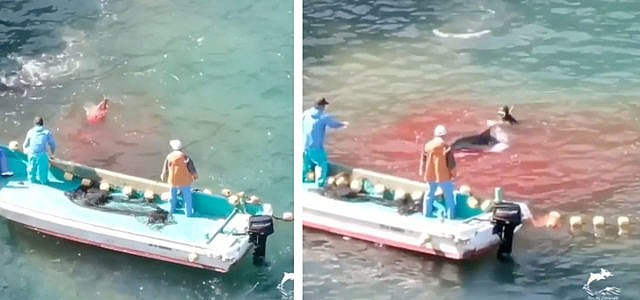 jagd delfine japan