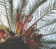 Palmöl Umfrage