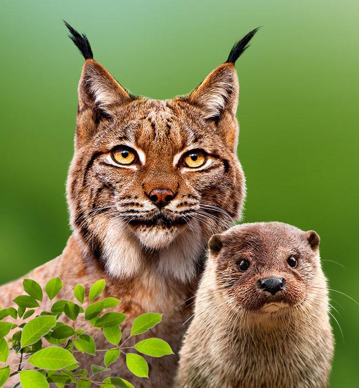 Krombacher Artenschutzprojekt