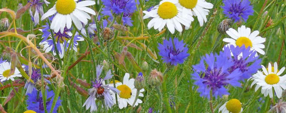 REWE Widerstand gegen Insektensterben Schutz Bienen