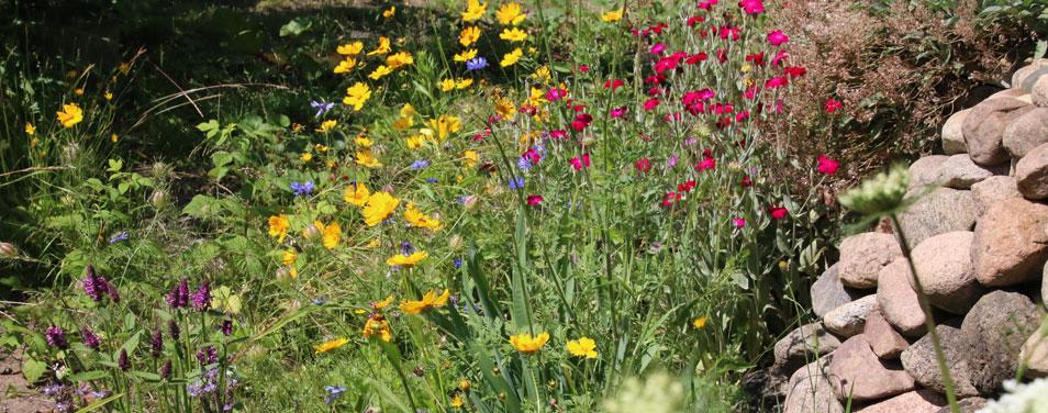 REWE Mut Ecken Garten Pflanzen Bienen