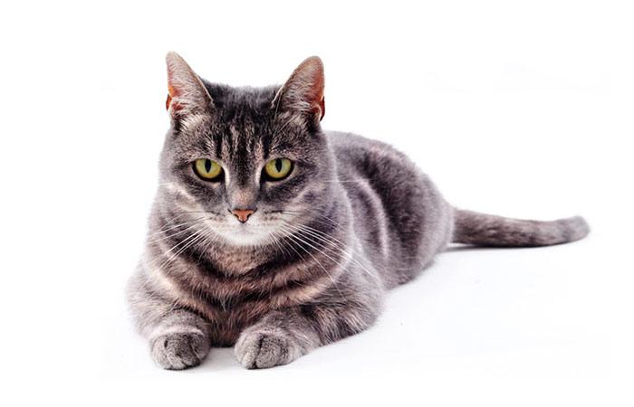demeter Katzenfutter Hundefutter gewinnen bio