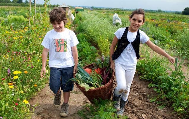 meine ernte - Gemüse selbst anbauen