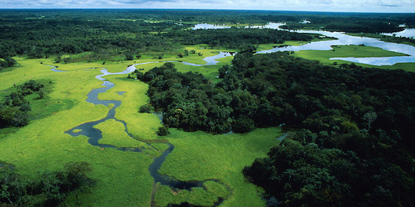 Umweltschutz Naturschutz biologische Vielfalt WWF Spenden