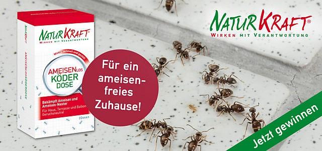 Gewinne eins von drei Produktpaketen non NaturKraft für ein ameisenfreies Zuhause!