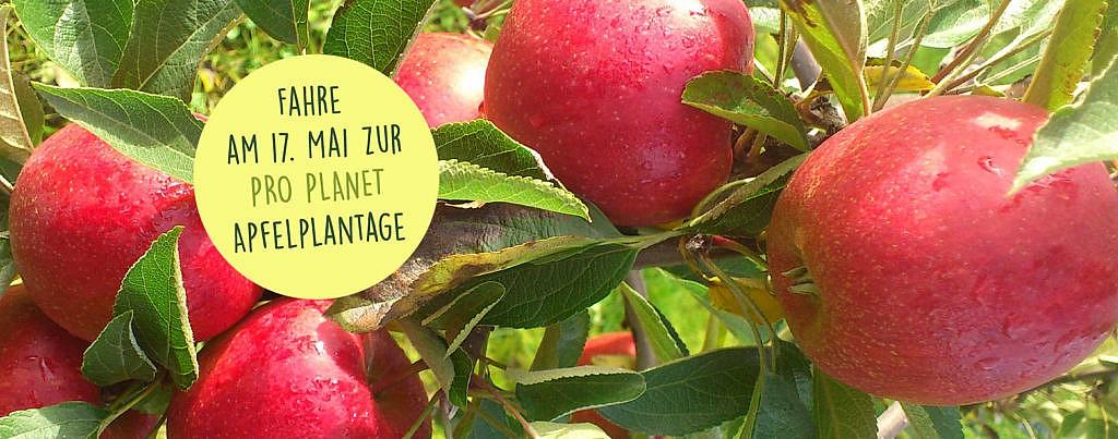 REWE Headerbild Apfelplantage