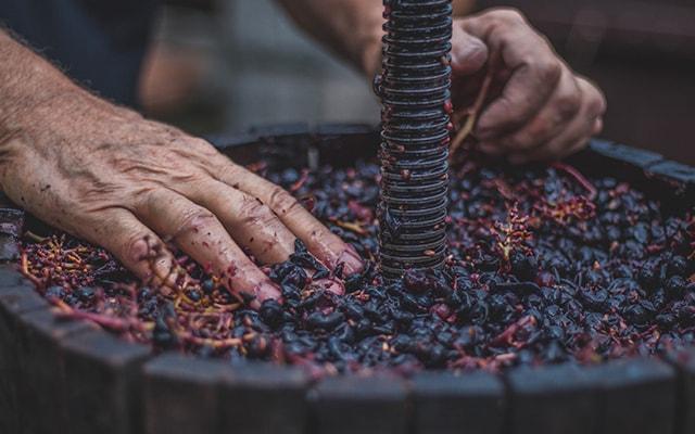 Jetzt TreedCoins einlösen und nachhaltigen Wein daheim verkosten!