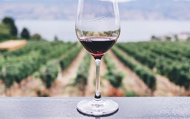 Grüner Weinbau