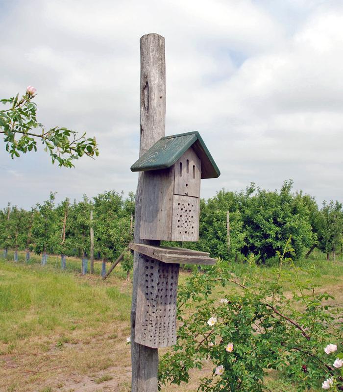 Insektenhotel auf der Pro Planet Apfelplantage