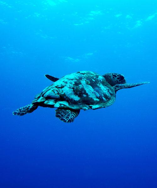 Ocean Plastic Tchibo Bademode
