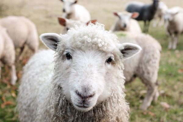 Tchibo Tierwohl - Tierschutz News
