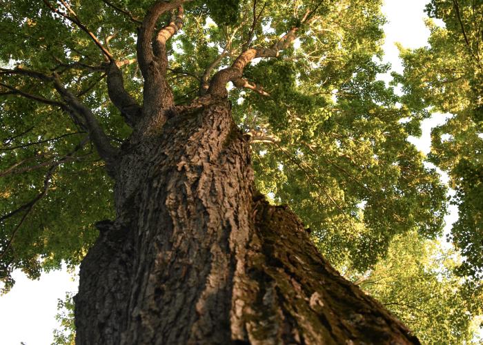 getsafe haftpflicht schutz versicherung baum pflanzen