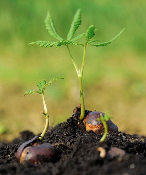 Versicherung Baum pflanzen soziale Projekte Versicherer im Raum der Kirchen