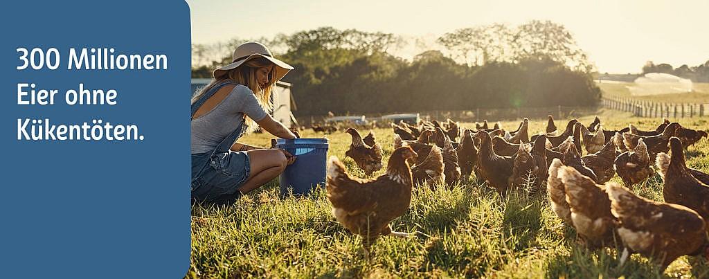 REWE Markt Eier ohne Kükentöten Respeggt