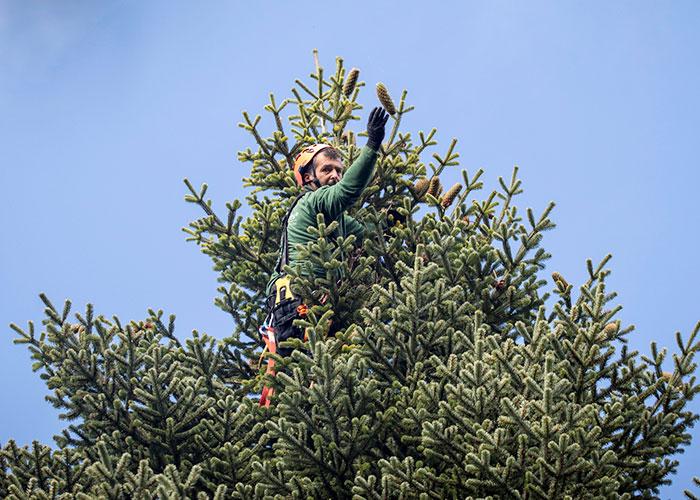toom Gewinnspiel weihnachtsstern weihnachtsbaum