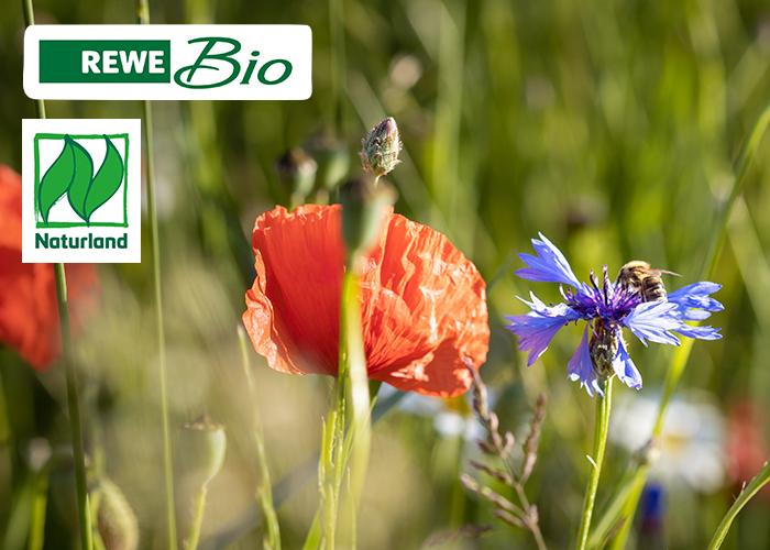 REWE Bio Bienenschutz Artenvielfalt schützen Bio Blütenhonig