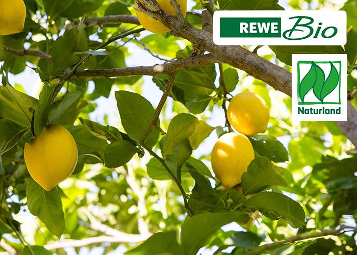 REWE Bio Zitronensorbet sozial