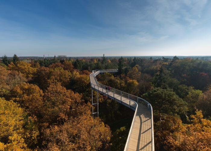 Tourismus Marketing Brandenburg Baumkronenpfad