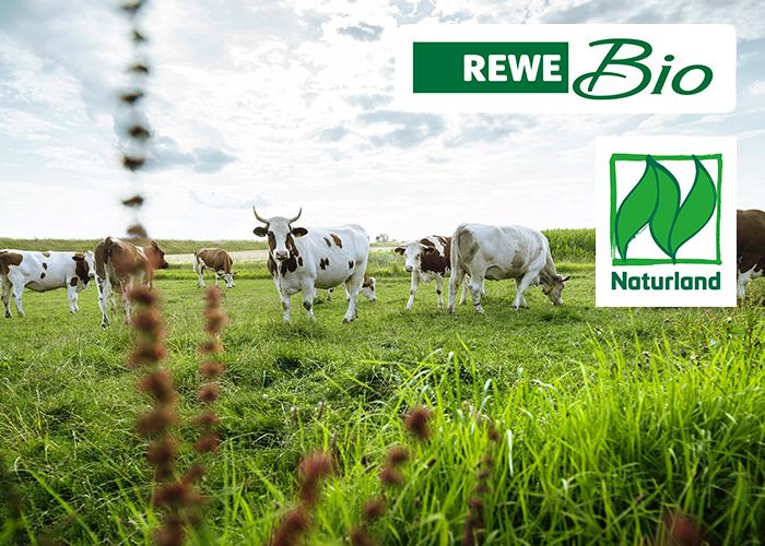 rewe bio tierwohl milchkühe naturland weide gras