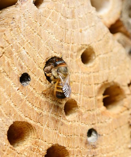 toom Gewinnspiel Insekten Schutz Bienen Insektenhotel