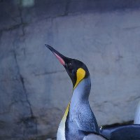 Profilbild von Penguinpaul